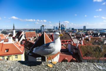 Cityscape Estonia