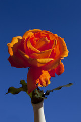 Red Rose on Sky BG