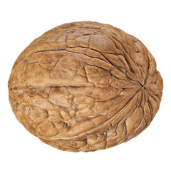 One Walnut isolated closeup in shell as package design element collection on white background.  Walnut macro with clipping path. Full depth of field.