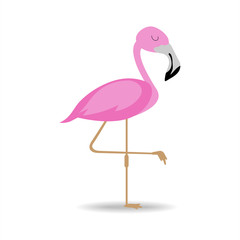 flamingo isolated on white background.pink flamingo standing.beautiful vector element.flamingo flat vector design.