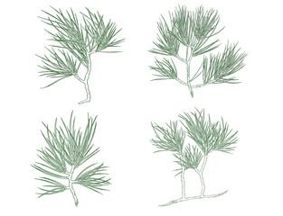 Set of Green Christmas pine tree branch. Contour illustration