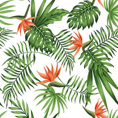 strelitzia orange white background pattern