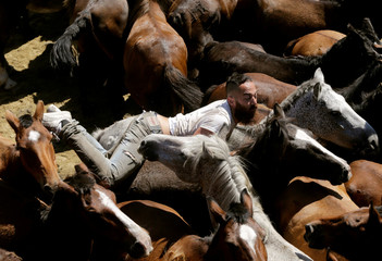 """A reveller tries to hold on to a wild horse during the """"Rapa das Bestas"""" traditional event in the village of Sabucedo"""