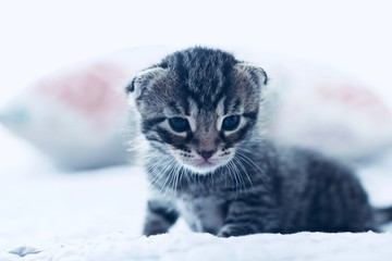 Cute young cat