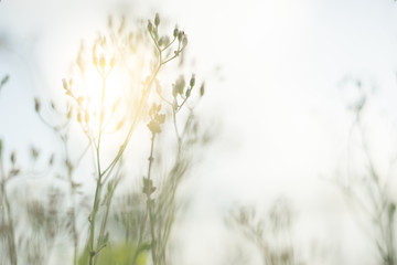 blurred image of glass flower
