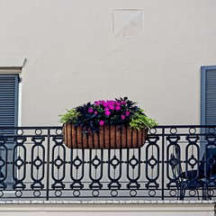 Flowers in Basket on Baloney in The French Quarter