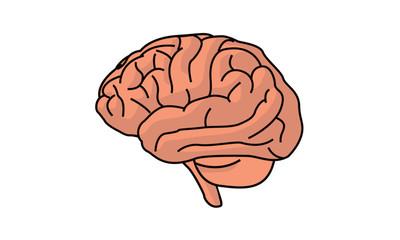 Vector Brain Illustration isolated on white