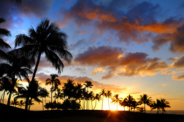 Tropical Palm Trees Silhouette Sunset or Sunrise