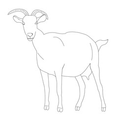 vector, isolated goat sketch