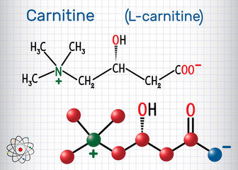 Carnitine (L-carnitine) molecule. Structural chemical formula and molecule model. Sheet of paper in a cage