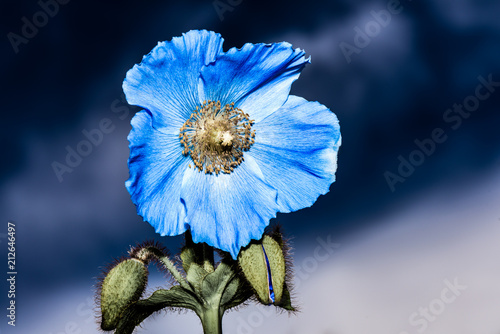 Abstract Macro Photo With Flower Made In Dark Shade Of Blue
