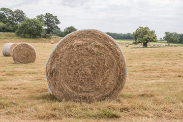 Giant hay bales in the English countryside