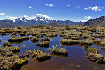 Beautiful view of bofedales with native vegetation in the Huaytapallana mountain range.