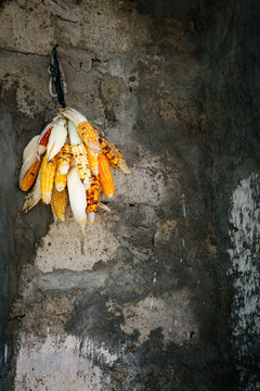 Corn cob hanging on the wall of a poor village in Africa