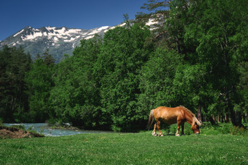 Beautiful nature landscape of mountains with snow and green forest. Pony horse are eating grass on meadow
