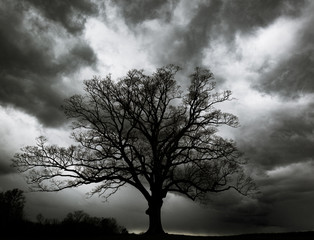 Oak tree with storm clouds.