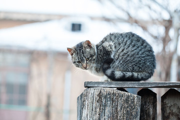 Cat on a wooden fence