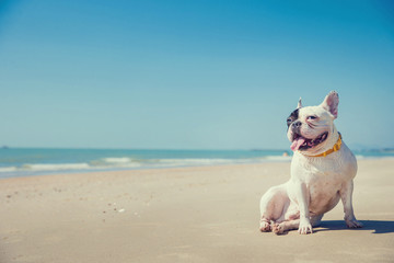 Fototapeten Französisch bulldog Portrait of french bulldog on the beach