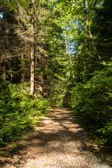 shun light shedding on the trail inside forest