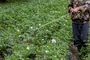 Man spraying of pesticide on potato plantation.