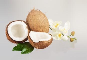 Coconut.