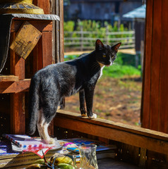 A cat at rural house