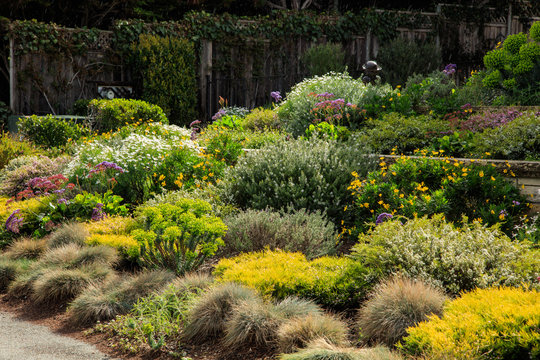 A varied palette of planting at a home in California showcasing layout and design ideas for multiple plants.
