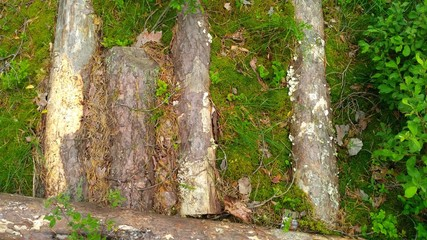 logs in the moss