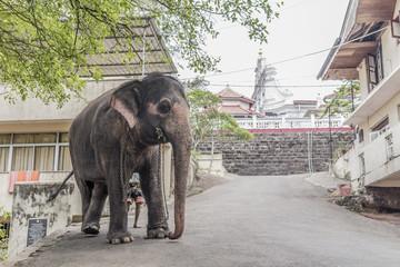Sri Lanka Tempel Elefant