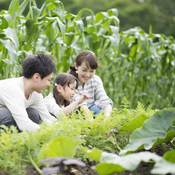 畑で農作業をする親子