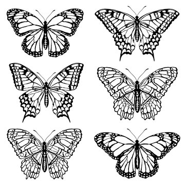 Set of butterfly silhouettes. Realistic vector illustrations isolated on white background.