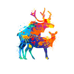 Silhouette of mating deers. Splash paint