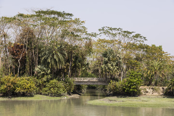 Landscape with tropical vegetation with a bridge at a riverside in Bangladesh