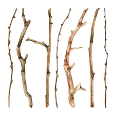 Watercolor hand drawn set of dry tree branches