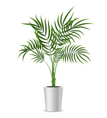 Realistic Detailed 3d Potted Green Tropical Palm Tree. Vector