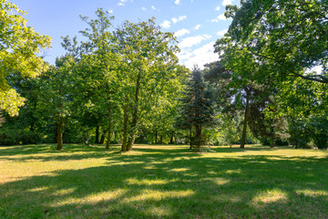 Idyllic nature landscape - green trees and lawn in a public park on a sunny day.