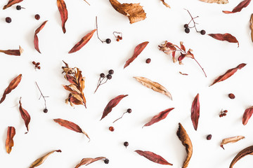 Autumn composition. Pattern made of dried autumn leaves on white background. Flat lay, top view