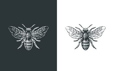 Honey bee logo. Hand drawn engraving style illustrations.