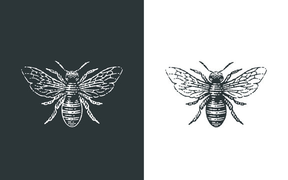Honey bee logo. Hand drawn engraving style illustrations.