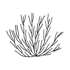 algae bush hand drawing vector isolated. marine plants