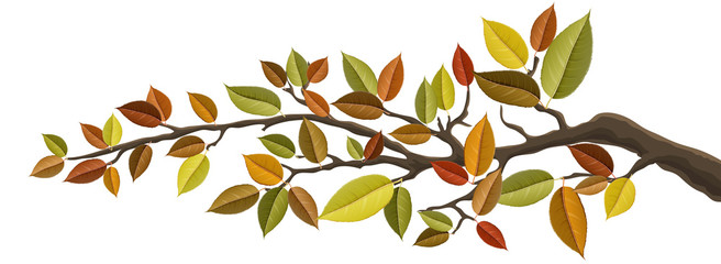 Autumn tree branch with colorful autumn leaf set. Vector illustration for horizontal banner, isolated on white for nature design
