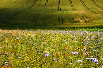 Łąka pełna kwiatów w letni poranek