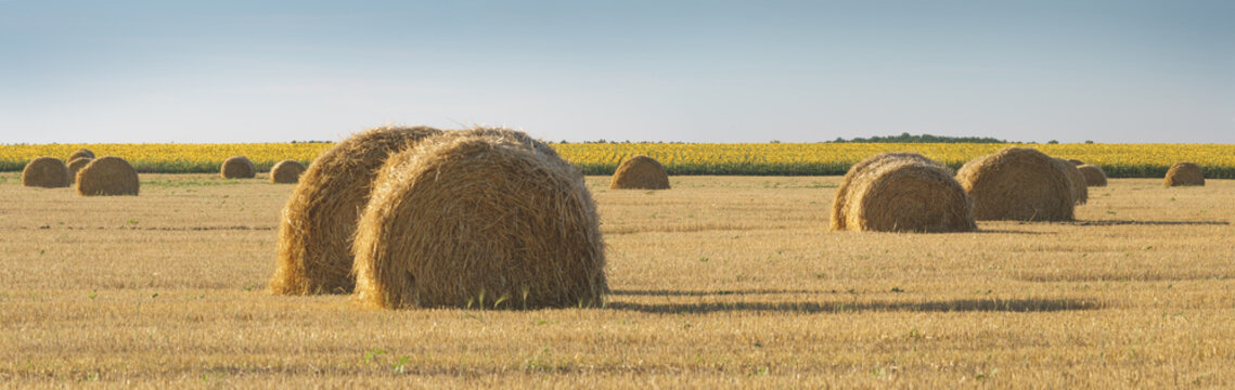 Panoramic view of field with wheat straw, hay bales and sky, rural landscape in the agriculture farm land.