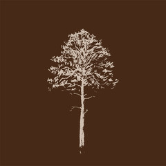Pine tree. Line drawing Isolated on brown Background. Hand drawn sketch. Vector illustration.