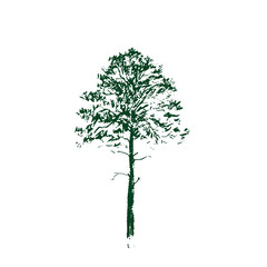 Pine tree. Green Line drawing Isolated on white Background. Hand drawn sketch. Vector illustration.