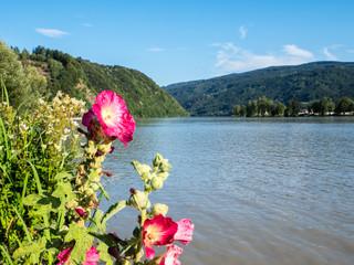 Donautal in Oberösterreich