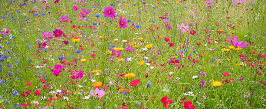Field of colorful summer flowers in Traunstein region, Bavaria, Germany.