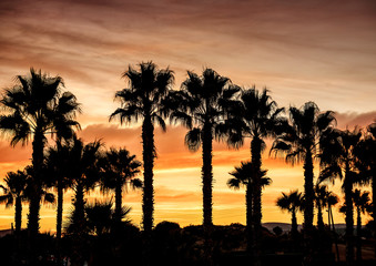 silhouettes of palm trees on yellow sunset