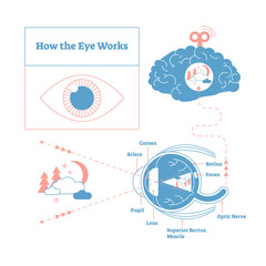 How the eye works medical scheme poster, elegant and minimal vector illustration, eye - brain labeled structure diagram. Stylized and artistic medical design poster.