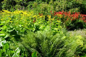 Summer garden border flowerbed display